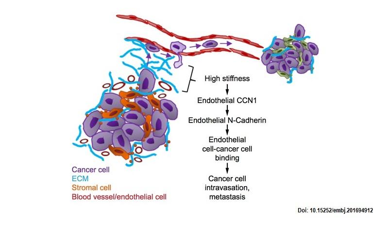 tumour progression