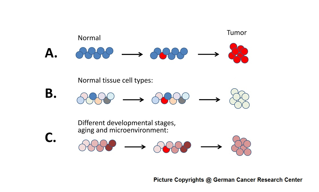 Origin of Cancer and cancer stem cell